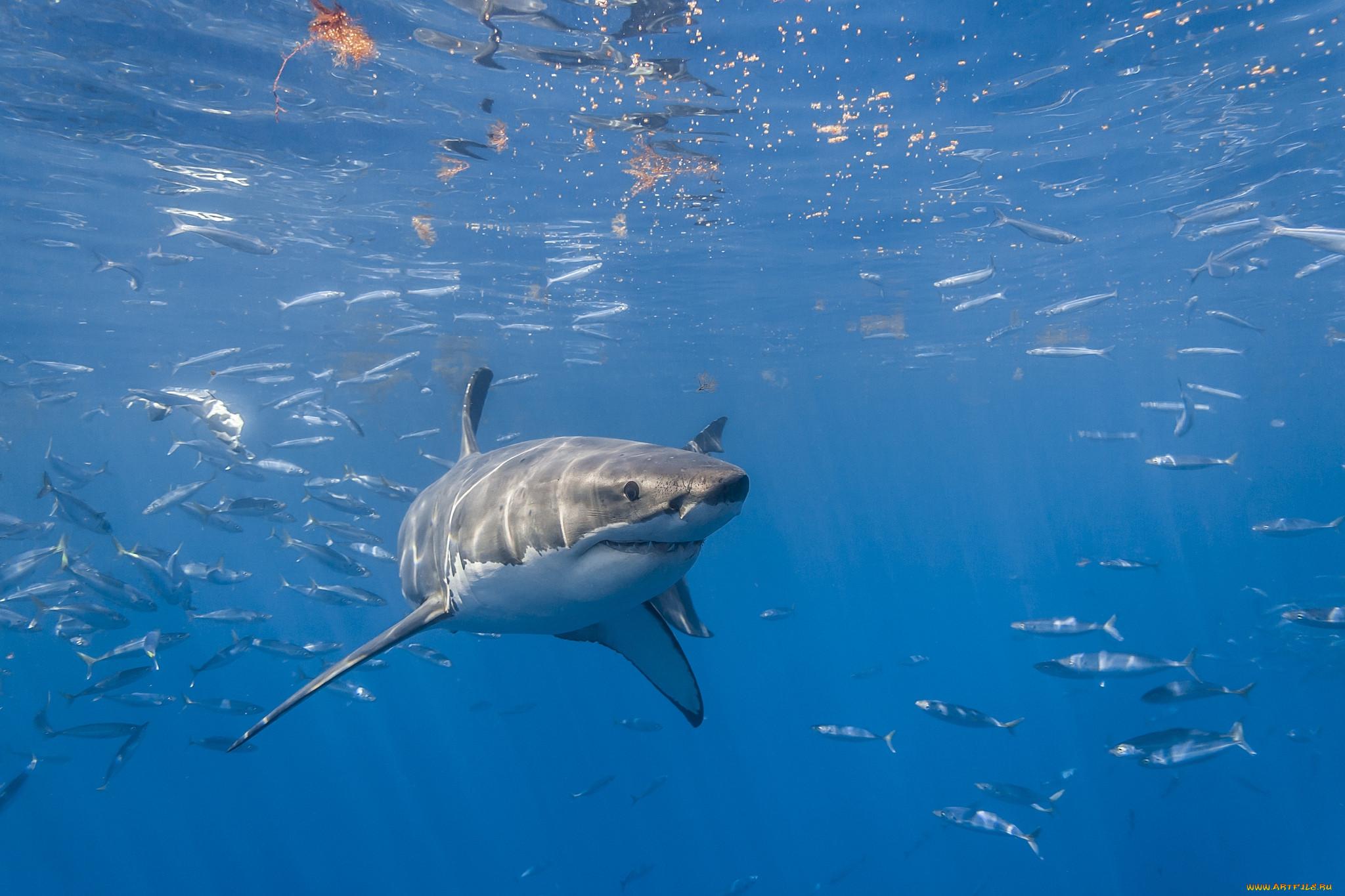 буровая установка картинки акул на поверхности океана камеры